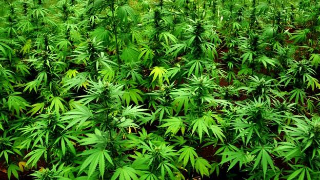 consumo-marihuana-washington-dc